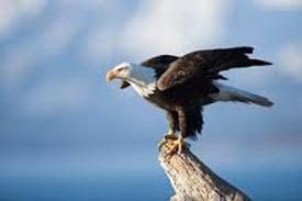 Eagleperch